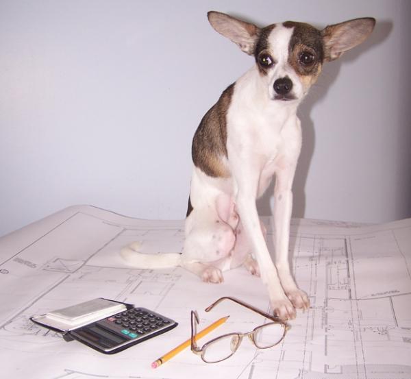Chico Estimating Service Dog